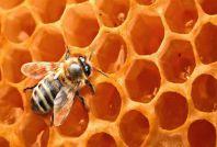 бджоли та мед