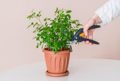життя зрізаної рослини